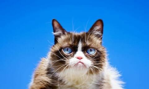 Grumpy Cat: Πέθανε η πιο αγαπημένη γκρινιάρα γάτα (pics+vid)