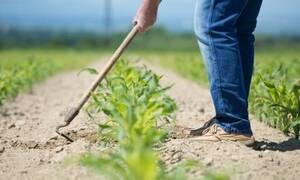 Ανατριχιαστικό: Ο κήπος έκρυβε το φοβερό «μυστικό» - Δείτε τι βρήκε