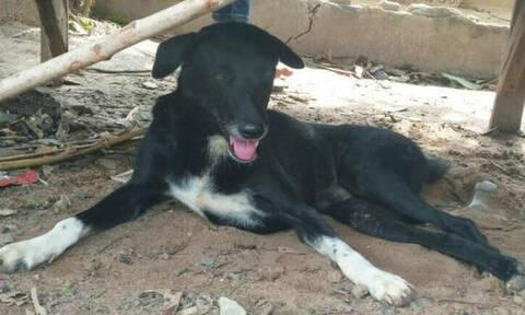 Ένας σκύλος - ήρωας: Έσωσε νεογέννητο που έθαψε η 15χρονη μητέρα σε χωράφι (pics)