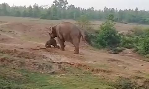 Ελέφαντας ποδοπάτησε και σκότωσε άνδρα για να προστατέψει το μωρό της