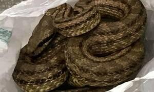 Повар одного из ресторанов г.Салоники обнаружил в холодильнике змею