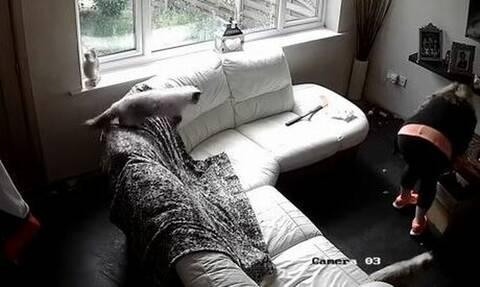 Έπαθαν ΣΟΚ όταν είδαν σε κρυφή κάμερα τι έκανε η babysitter μέσα στο σπίτι τους (pics)