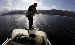 Προσοχή! Ψάρια - «δολοφόνοι» στις ελληνικές θάλασσες - Συναγερμός στις Αρχές (Pics)