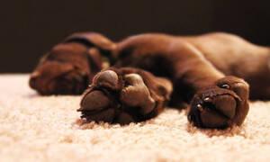 В Греции неизвестные убили щенка из ружья для подводной охоты