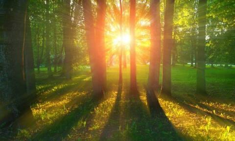 Σήμερα 26/05: Κοίτα το δάσος κι όχι το δέντρο