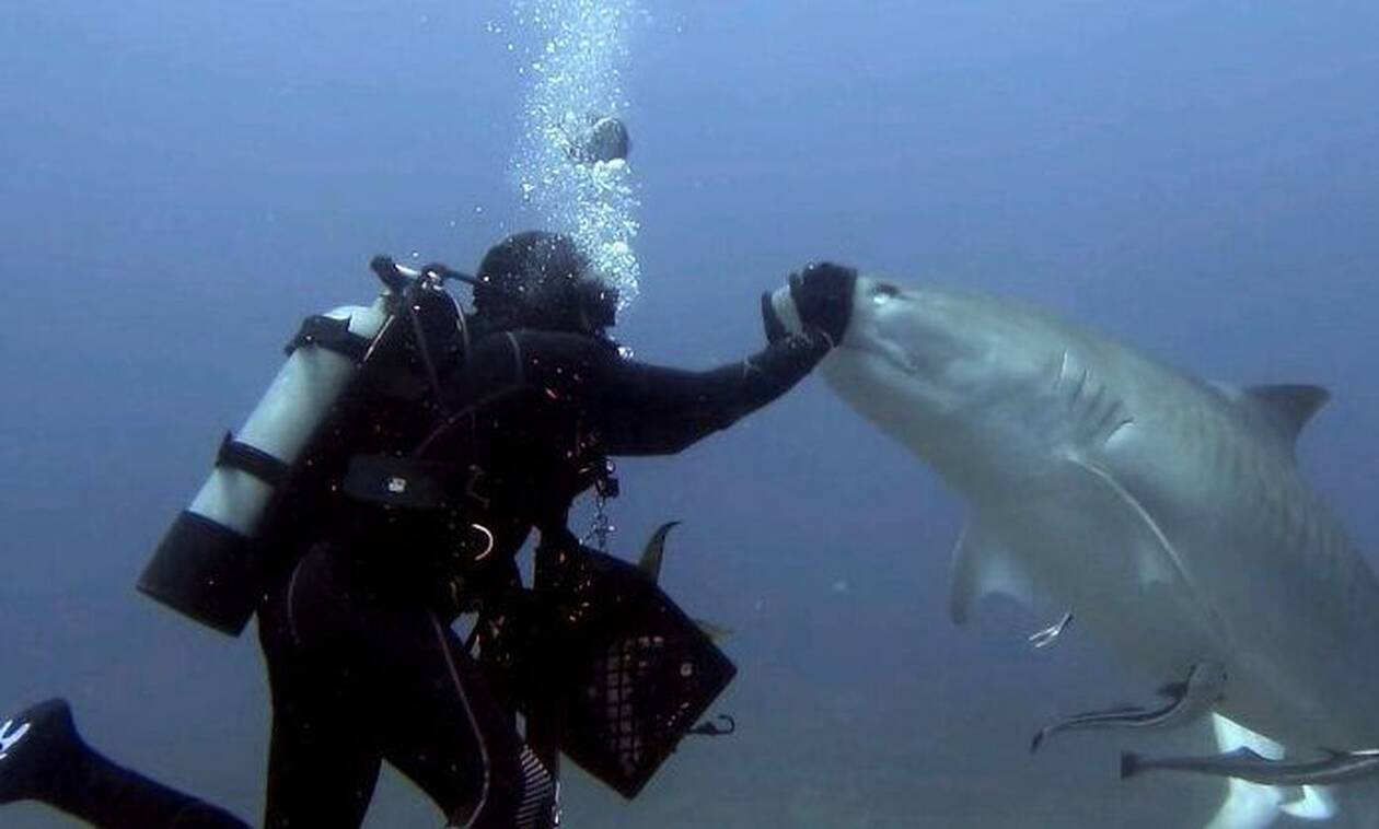 Εκαναν ψαροντούφεκο και δέχτηκαν... επίσκεψη από καρχαρίες! Δεν φαντάζεστε τι ακολούθησε (video)