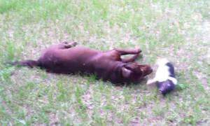 Αυτή είναι σίγουρα από τις πιο ασυνήθιστες φιλίες ζώων (vid)