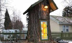 Η πιο μικρή βιβλιοθήκη βρίσκεται στον κορμό ενός δέντρου