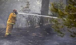 Израиль поблагодарил Кипр и Грецию за помощь в тушении лесных пожаров