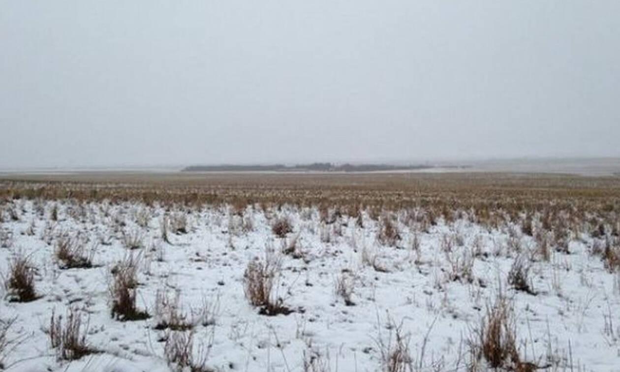 Τρομερή οφθαλμαπάτη: Χιονίζει ή βλέπεις πρόβατα;