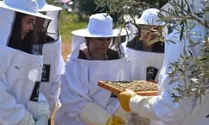 APIVITA: Θεσμός η Παγκόσμια Ημέρα Μέλισσας