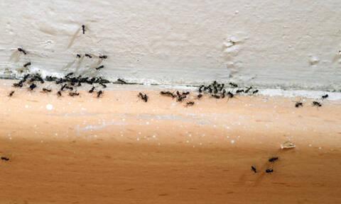 Αυτά είναι τα 6 φυσικά υλικά που διώχνουν οριστικά τα μυρμήγκια από το σπίτι (pics)