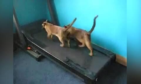 Αυτές είναι οι πιο τεμπέλες γάτες (video)