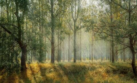 Κομοτηνή: Θρίλερ στο δάσος – Αποκαλύφθηκε η αλήθεια και συνελήφθησαν
