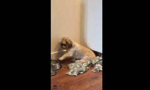 Τρελό γέλιο! Σκυλάκι δείχνει πως δεν έχει χορτάσει! (video)