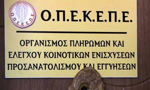 ΟΠΕΚΕΠΕ: Πληρωμές ύψους 11,5 εκατ. ευρώ σε 10.019 δικαιούχους