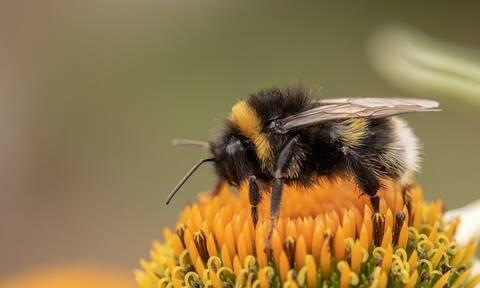 Τραγωδία στη Μάνη: Φρικτός θάνατος για άνδρα από τσιμπήματα μελισσών