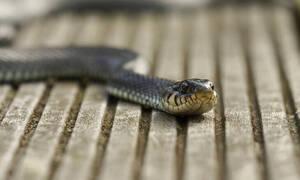 Απίστευτη δικαιολογία: Δημόσια υπάλληλος υποστήριξε πως ένα φίδι... έφαγε 100.000 ευρώ