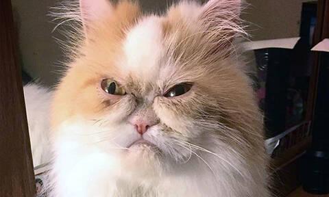 Το Ίντερνετ βρήκε τη νέα «Grumpy cat» και είναι ενθουσιασμένο! (pics)