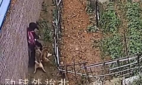 Ήρωας περαστικός έσωσε κοριτσάκι από αγέλη άγριων σκυλιών (pics+vid)