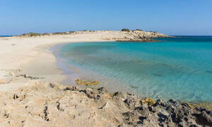 В Греции на острове Карпафос появилась рыба фугу