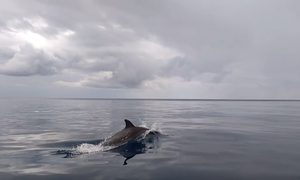У берегов Кипра замечена стая дельфинов