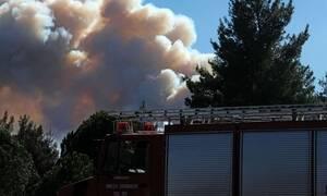Πυρκαγιά σε δάσος στη Βουρβουρού Χαλκιδικής