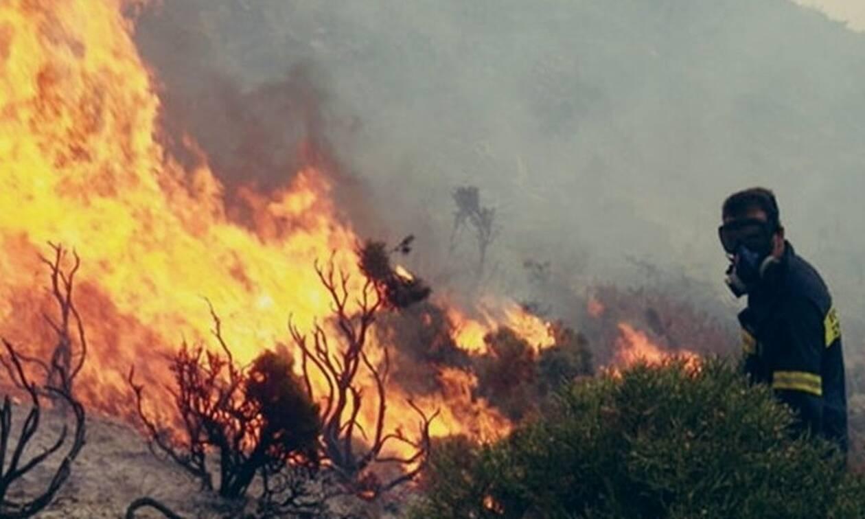 На Кипре в районе Пафоса начался масштабный лесной пожар