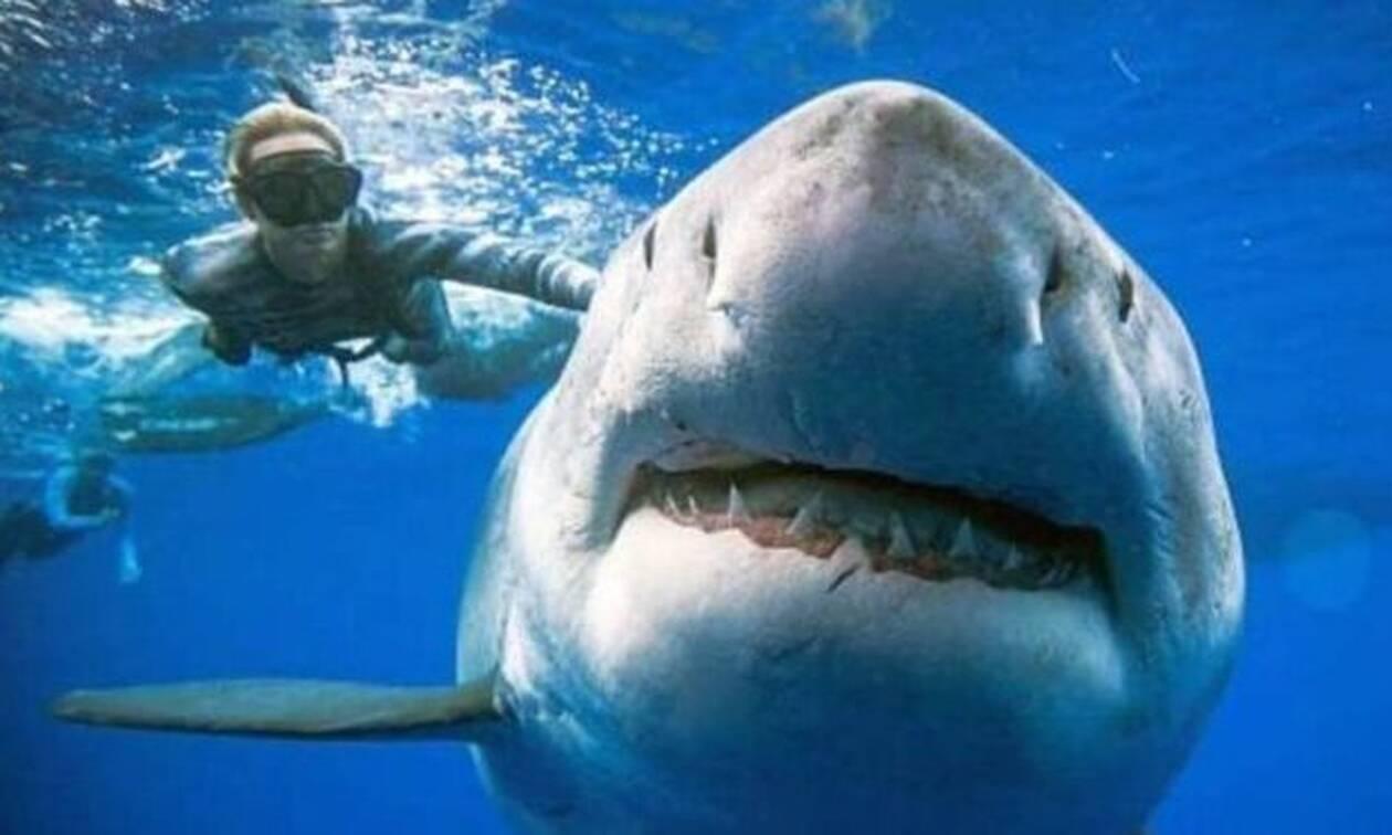 Δείτε τον μεγαλύτερο εν ζωή καρχαρία του κόσμου!