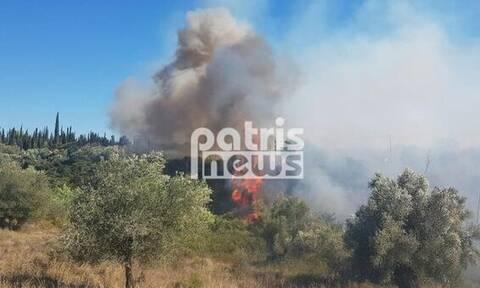 Φωτιά ΤΩΡΑ: Καίγεται δασική έκταση στην Δυτική Αχαΐα
