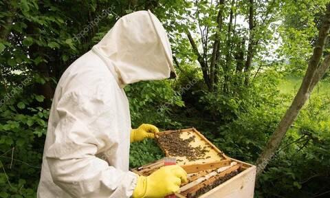 Τρίκαλα: Τι είδε μελισσοκόμος και έμεινε άφωνος;