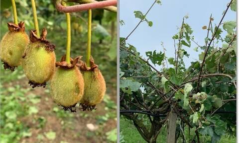 Ισχυρή χαλαζόπτωση στον κάμπο της Άρτας: Σοβαρές ζημιές σε καλλιέργειες