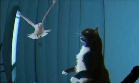 Έδειξαν στην γάτα πουλί στο λάπτοπ - Η αντίδρασή της προσφέρει τρελό γέλιο (video)