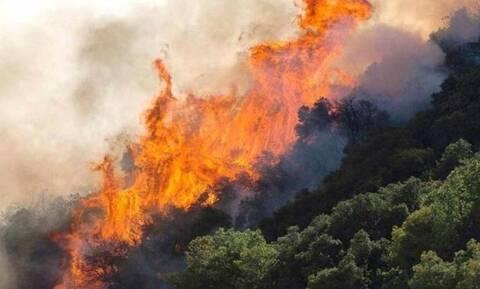 Φωτιά ΤΩΡΑ: Μεγάλη πυρκαγιά στους Αγίους Θεοδώρους