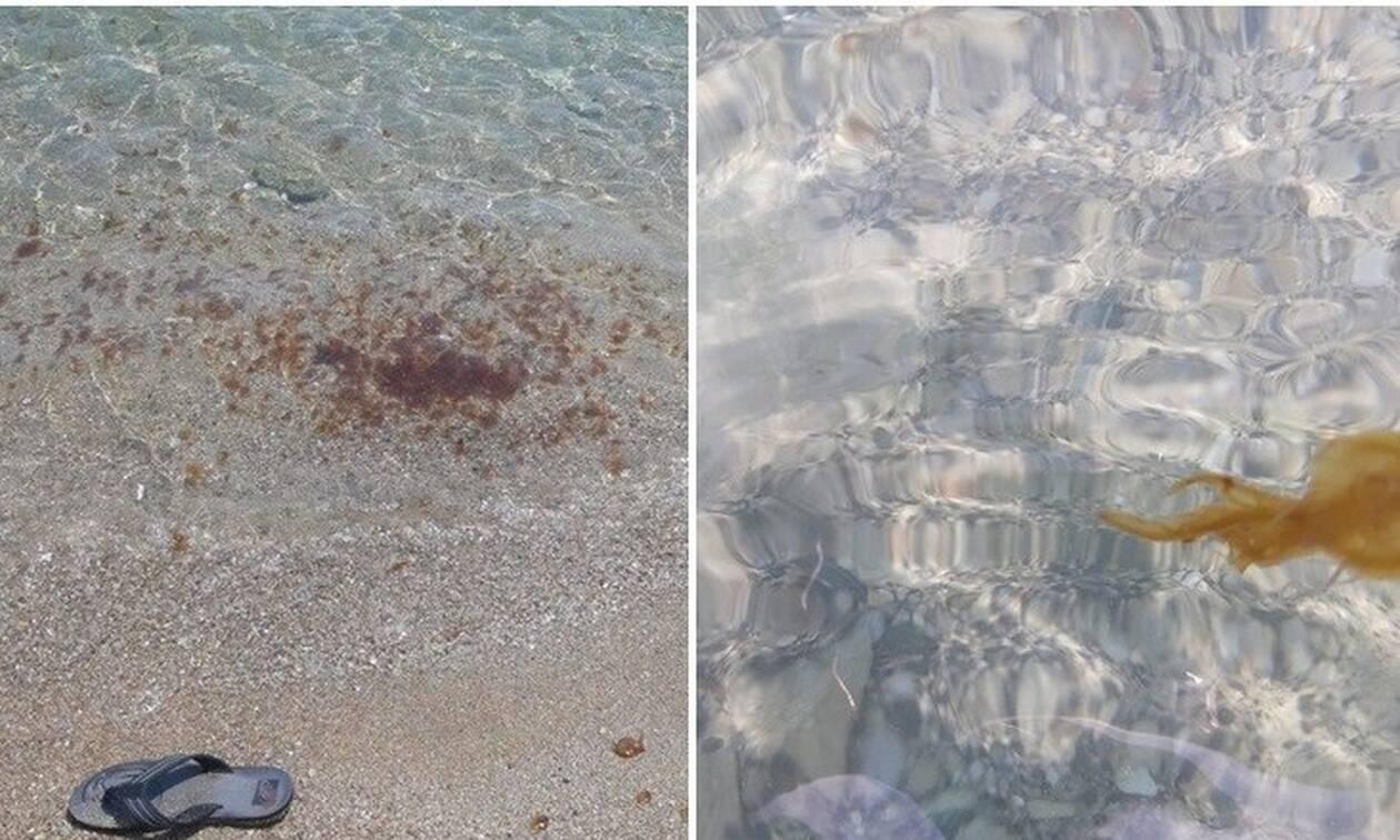 Τρόμος σε παραλίες της Κύπρου: Προειδοποίηση από τις αρχές