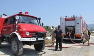 Χαλκιδική: Υπό έλεγχο η φωτιά στο Καλαμίτσι