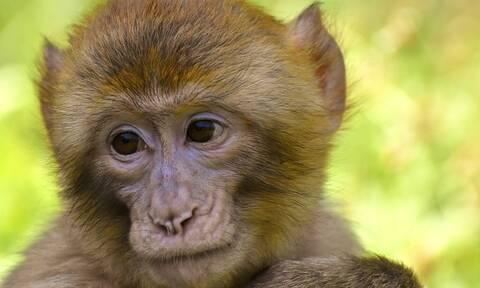 Πόζαραν χαρούμενοι στο φακό... υπολόγισαν όμως χωρίς την αγενή μαϊμού! - Δείτε τι τους έκανε