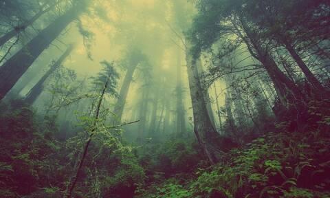 Τρομακτικό: Σχεδόν 600 είδη φυτών έχουν εξαφανιστεί τα τελευταία 250 χρόνια