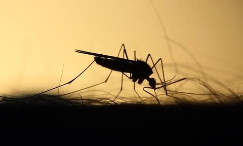 Μπορεί η επιστήμη να ελέγξει τα κουνούπια με την ηλεκτρονική μουσική;