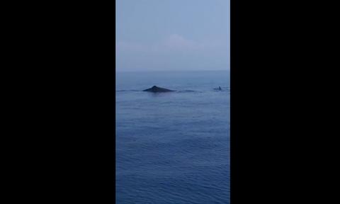 Κύπρος: Φάλαινες ανοικτά της Καρπασίας
