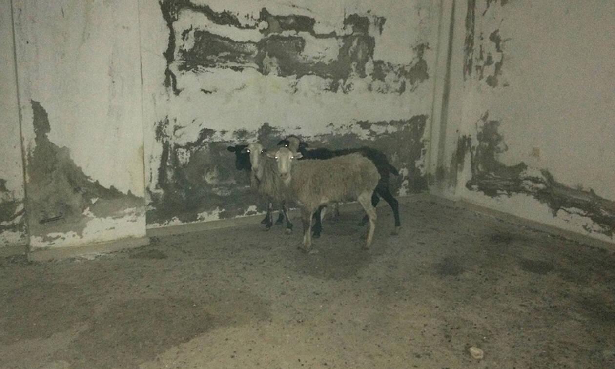 Σοκ στην Κρήτη: Εικόνες φρίκης – Φυλάκιζε ζώα και τα άφηνε να πεθαίνουν μαρτυρικά
