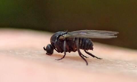 Έτσι θα διώξετε τις μύγες από το σπίτι σας (pics)