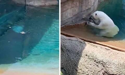 Προσπάθησαν να ταΐσουν μια πάπια! Επαθαν σοκ όταν είδαν την αρκούδα να... (video)