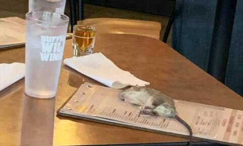 Τρομερό! Ζωντανός αρουραίος έπεσε σε τραπέζι πελάτη! (pics+vid)