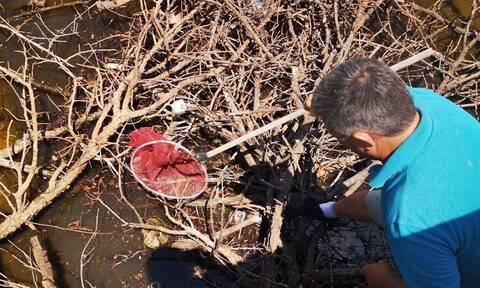 Ναύπλιο: Ο εφιάλτης κρυβόταν στη δεξαμενή – Δείτε τι βγήκε από εκεί (pics)