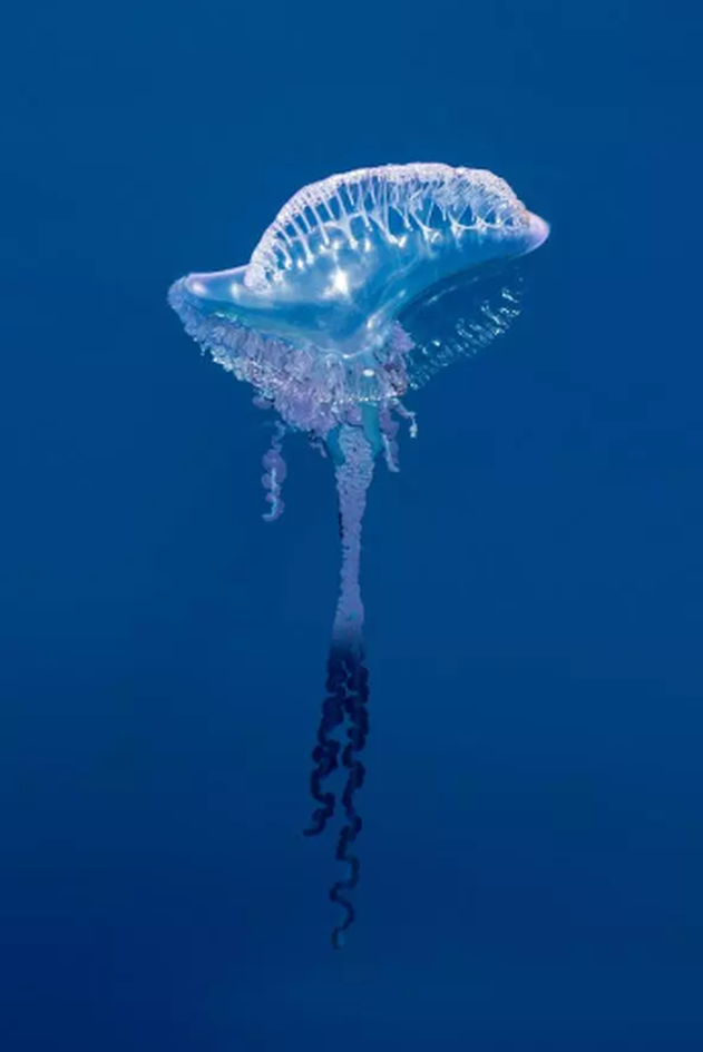medousa1.PNG