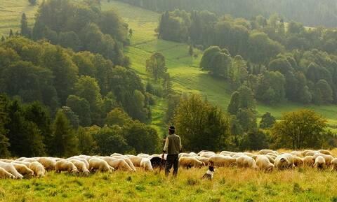 Με πόσα χρήματα θα επιδοτηθούν οι κτηνοτρόφοι