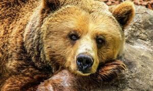 Αρκούδα κρατούσε άνδρα για 30 μέρες στη φωλιά της - Σοκάρει η εικόνα του (ΣΚΛΗΡΕΣ ΦΩΤΟ)