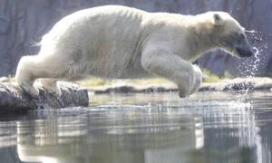 Βουτιές στο νερό και παγωμένα φρούτα - Έτσι αντιμετωπίζουν τον καύσωνα αυτά τα αξιαγάπητα ζώα (pics)