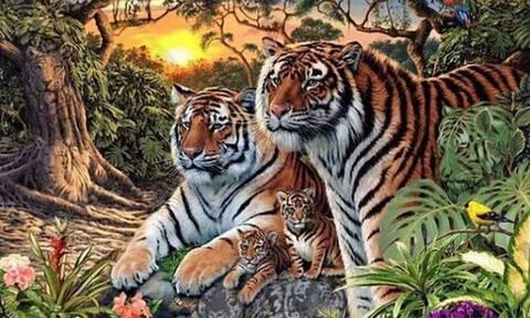 Τρομερό: Μπορείς να βρεις πάνω από 10 τίγρεις σε αυτή τη φωτογραφία; (pics+vid)